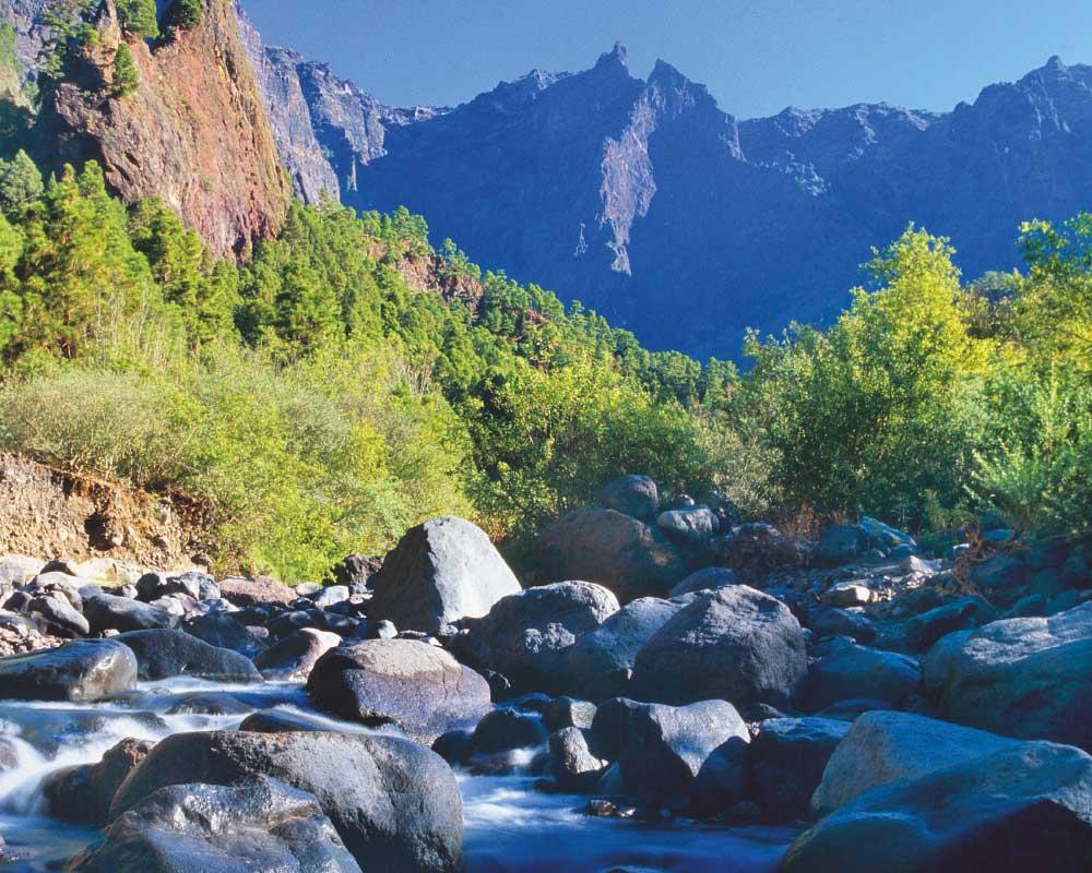 musts en La Palma