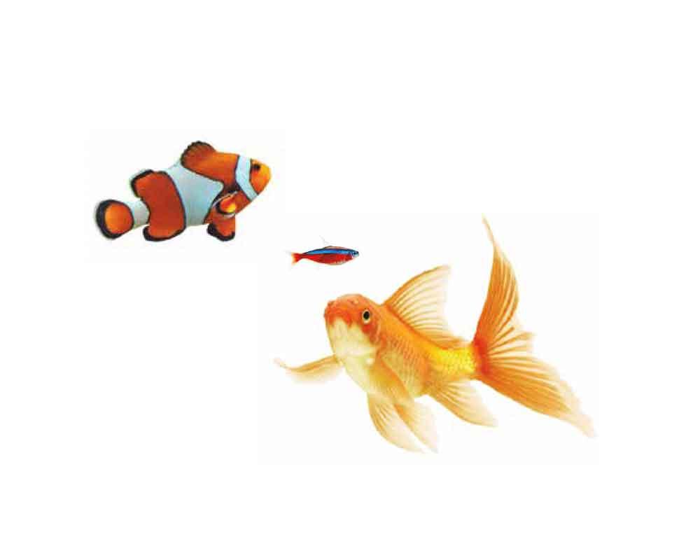bes-06-peces