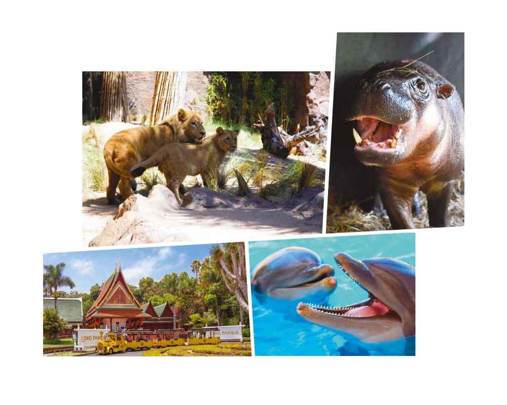 Hipopótamos-Pigmeos-Loro-Parque-besmag-17-01