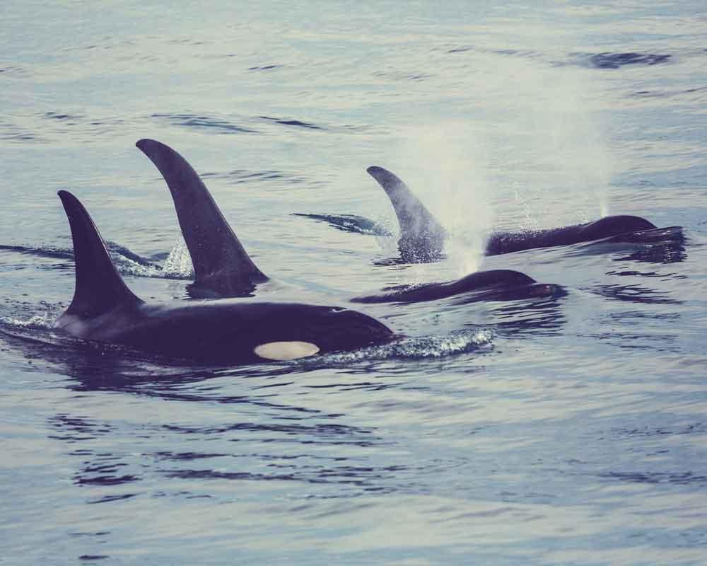 orca-besmag-19-01