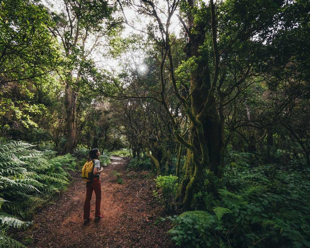 El Hierro Lugares de interés natural | Reserva Natural Integral de Mencafete