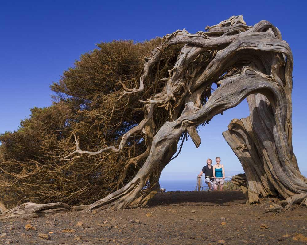 Sabinal | El Hierro Lugares de interés natural