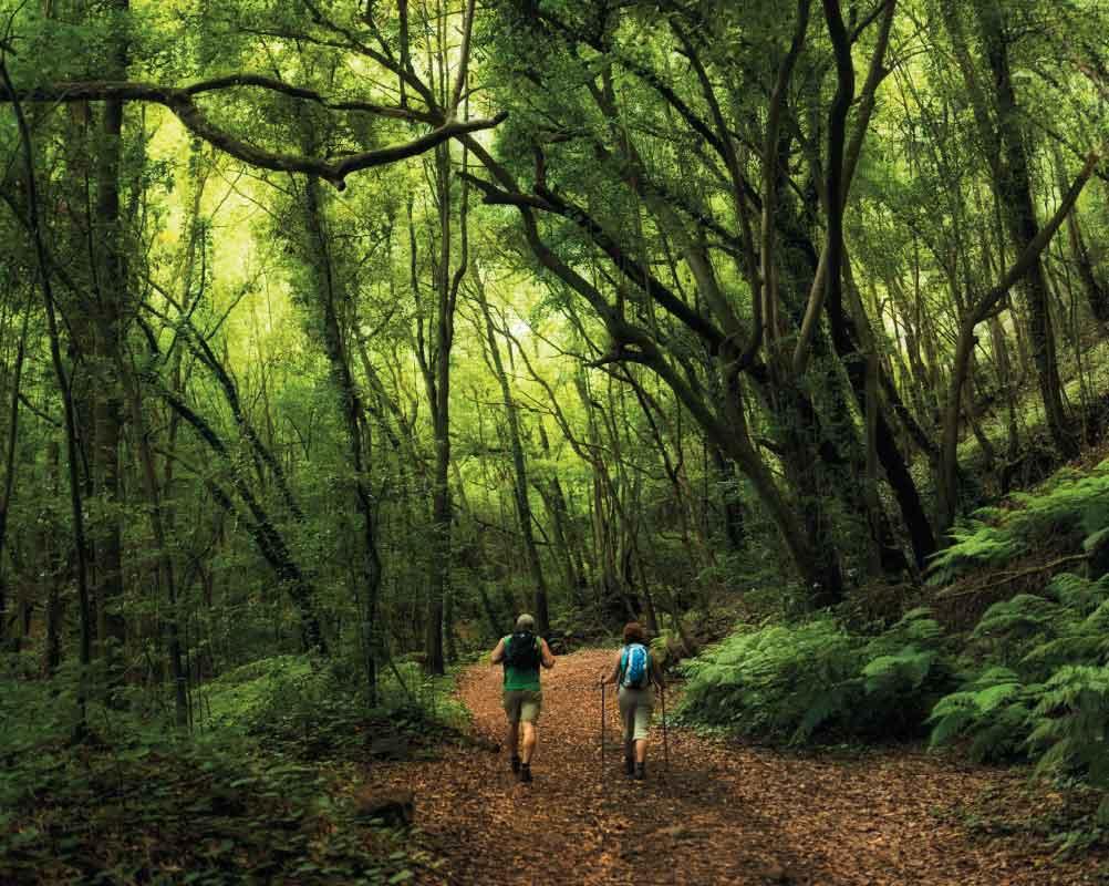Paseo POR LA Laurisilva | Dominic Dahncke / La Palma inspira naturaleza
