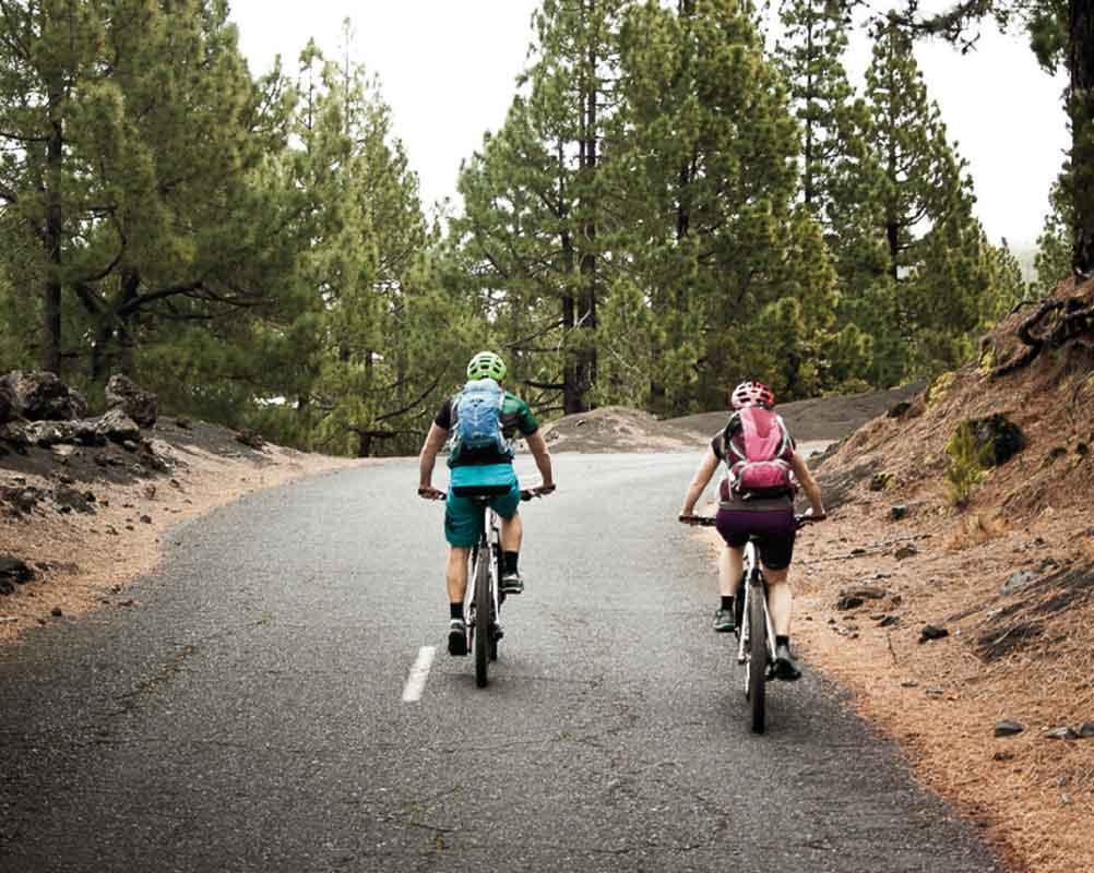 Bicis entre pinares  |  Borja Franqueira